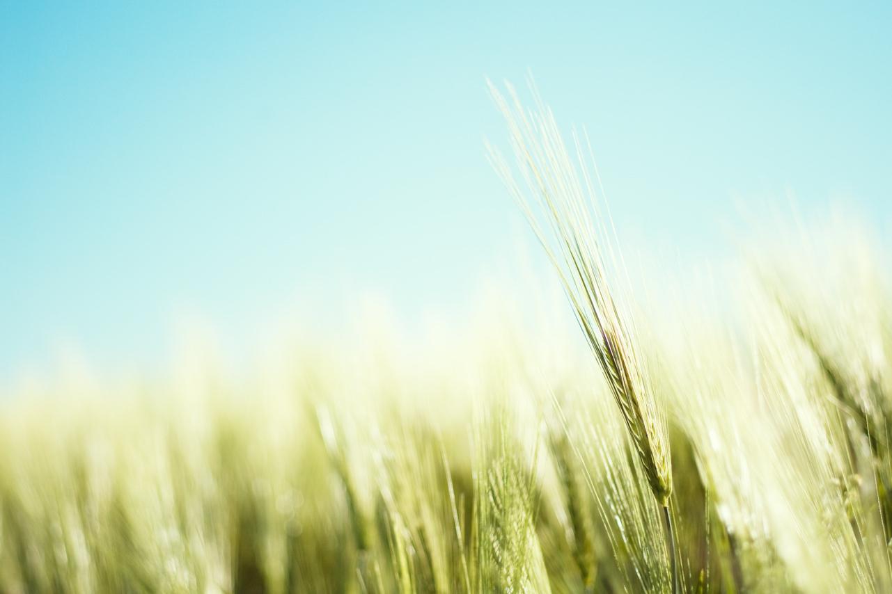 summer-field1