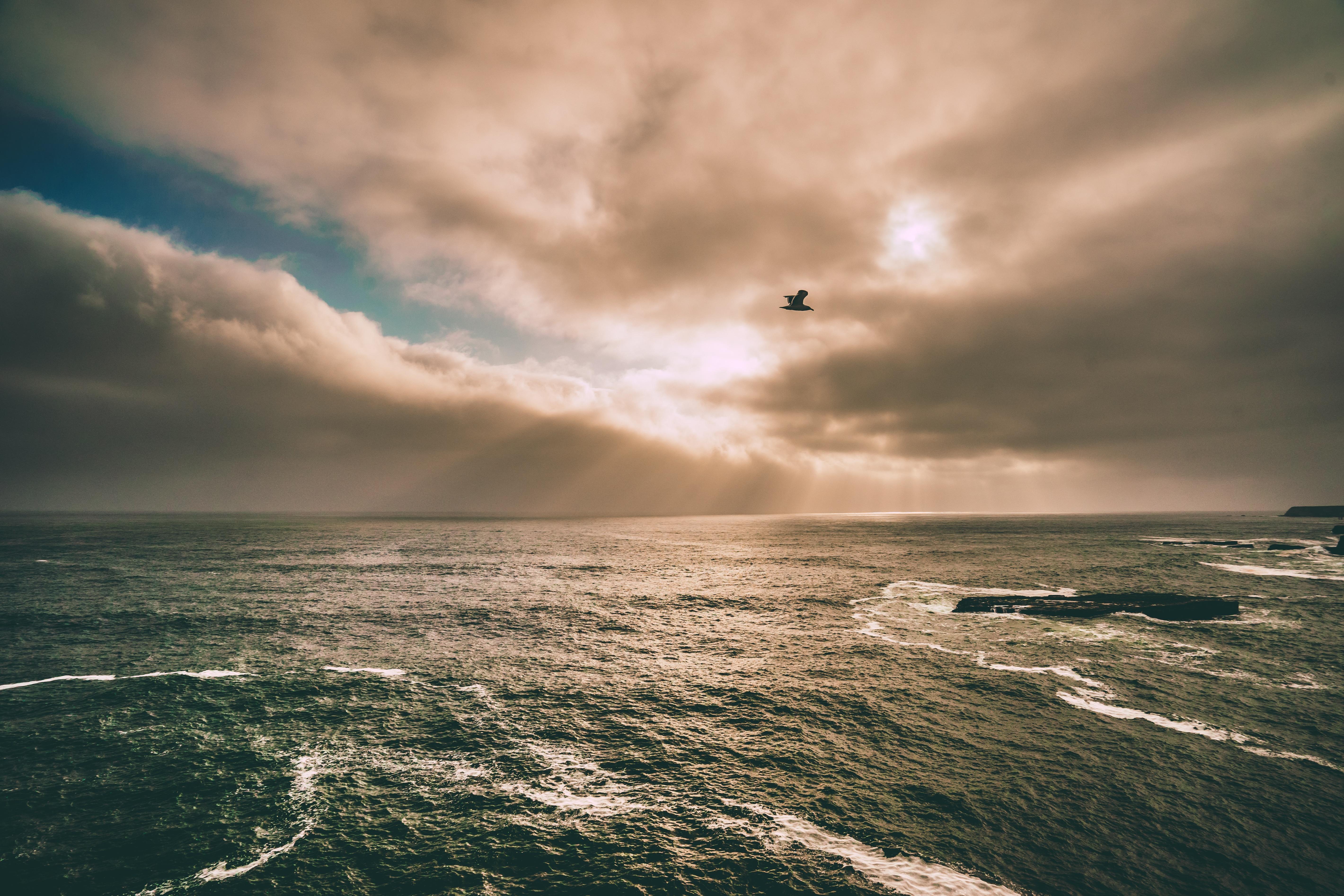 bird-and-ocean